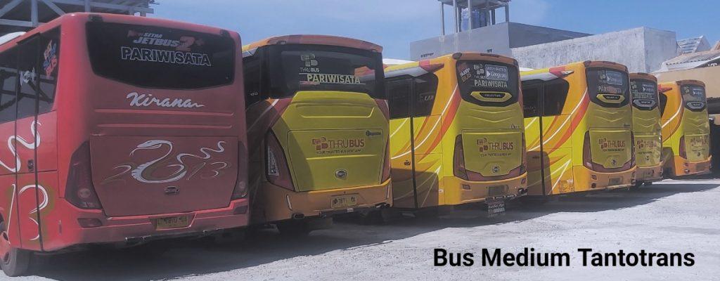 Gambar bus pariwisata medium